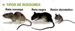 tipos de roedores (161x130) (404x167)
