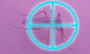 mosquito con luz azul