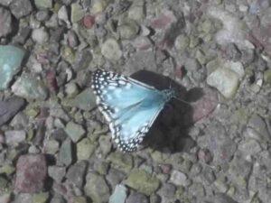 Mariposa 3, por Aunarsi