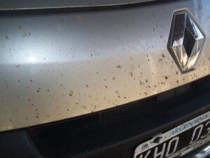 Insectos en auto, por Aunarsi